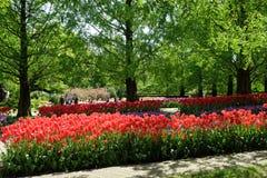 Los carriles de tulipanes en el Keukenhof real parquean Fotografía de archivo