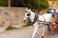 Los carros traídos por caballo   Imagen de archivo libre de regalías