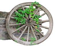 Los cartwheels viejos con la planta de la enredadera se inclinan contra la pared de madera vieja Fotografía de archivo