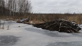 Los castores han construido la presa, nivel del agua aumentado del río en invierno almacen de metraje de vídeo