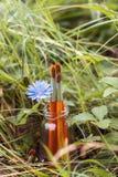 Los cepillos con la achicoria florecen en una botella en el fondo del gra Foto de archivo
