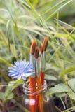 Los cepillos con la achicoria florecen en una botella en el fondo del gra Imágenes de archivo libres de regalías
