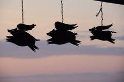 Los cerdos pueden volar Foto de archivo