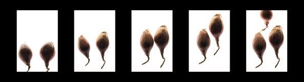 Los chalotes resumen imagen de los 1 - cuatro paneles foto de archivo