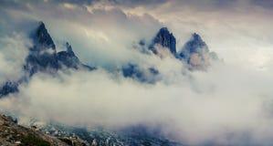 Los chapiteles del árbol aparecen en la niebla de la mañana Fotos de archivo libres de regalías