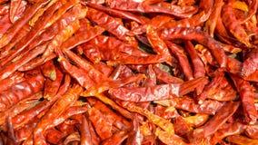 Los chillis rojos secados son preservados por la luz del sol Imágenes de archivo libres de regalías