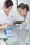 Los científicos jovenes atractivos de los estudiantes del doctorado que observan el color desplazan después del destillation de l imagenes de archivo