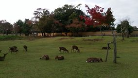 Los ciervos acompañan Imagen de archivo libre de regalías