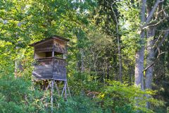 Los ciervos se colocan en la reserva natural Schoenbuch más forrest de Alemania Imagen de archivo libre de regalías