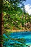 Los cinco colorearon la piscina con agua azul entre el bosque imperecedero Fotos de archivo