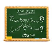 Los cinco sentidos Foto de archivo