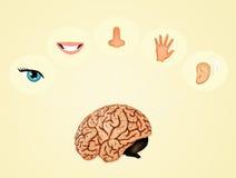 Los cinco sentidos Imagen de archivo