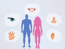 Los cinco sentidos en el cuerpo humano Foto de archivo libre de regalías