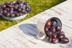 Los ciruelos se derraman fuera de la taza metálica en la tabla de madera en jardín el día soleado Foto de archivo libre de regalías