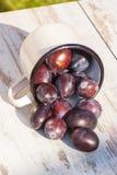 Los ciruelos se derraman fuera de la taza metálica en la tabla de madera en jardín el día soleado Imagen de archivo