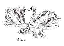 Los cisnes se juntan con los polluelos, bosquejo exhausto del garabato de la mano con la inscripción stock de ilustración