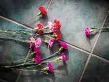 Los claveles coloridos con el espacio de la copia en el granito emergen Imagen de archivo