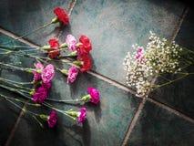 Los claveles coloridos con el espacio de la copia en el granito emergen Fotos de archivo libres de regalías