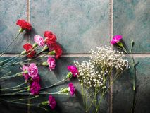 Los claveles coloridos con el espacio de la copia en el granito emergen Foto de archivo