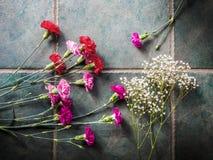 Los claveles coloridos con el espacio de la copia en el granito emergen Fotografía de archivo libre de regalías