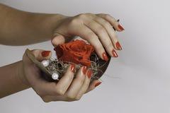 Los clavos rojos sostienen la decoración de la rosa del rojo fotografía de archivo libre de regalías