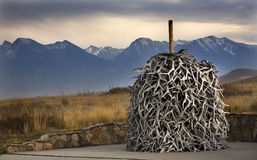 Los claxones de los alces llenan el rango nacional Charlo Montana del bisonte fotos de archivo libres de regalías