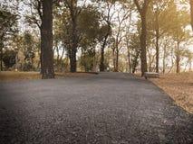 Los cloes dramáticos encima de la manera de la trayectoria de asfalto en parque público del otoño de la caída con la luz caliente fotos de archivo