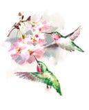 Los colibríes que vuelan alrededor del ejemplo del pájaro de la acuarela de las flores dan exhausto stock de ilustración