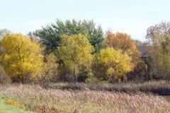 Los colores brillantes de la caída Foto de archivo libre de regalías