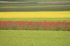 Los colores de castelluccio di norcia Fotos de archivo