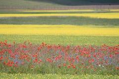 Los colores de castelluccio di norcia Imagen de archivo