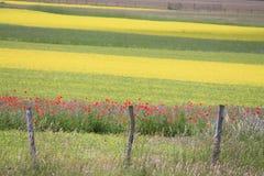 Los colores de castelluccio di norcia Foto de archivo libre de regalías