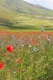 Los colores de castelluccio di norcia Fotos de archivo libres de regalías