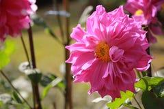 Los colores de flores Imagen de archivo libre de regalías