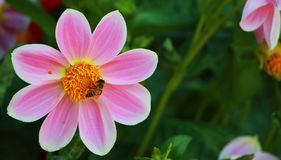 Los colores de flores Fotografía de archivo
