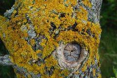 Los colores de la naturaleza Imagen de archivo libre de regalías