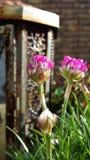Los colores de la primavera son brillantes Foto de archivo libre de regalías