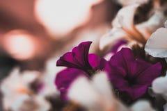 Los colores de las flores fotografía de archivo
