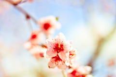 Los colores del amor en la floración de la primavera fotos de archivo