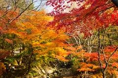 Los colores del otoño fotos de archivo libres de regalías