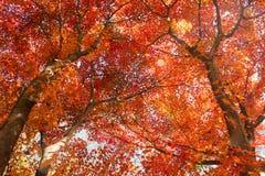 Los colores del otoño imágenes de archivo libres de regalías