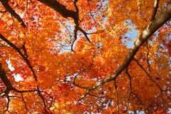 Los colores del otoño imagenes de archivo