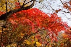 Los colores del otoño fotografía de archivo