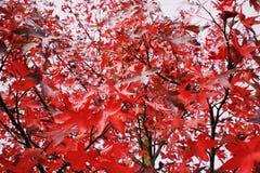 Los colores del otoño Foto de archivo