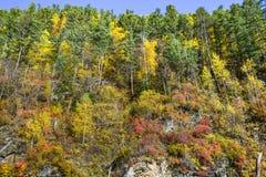 Los colores del otoño fotografía de archivo libre de regalías