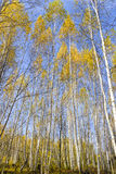 Los colores del otoño fotos de archivo