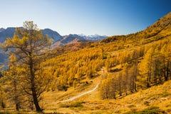 Los colores del otoño en las montañas Imagen de archivo libre de regalías