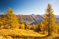 Los colores del otoño en las montañas Foto de archivo libre de regalías