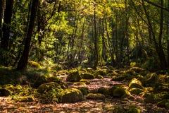 Los colores del otoño están viniendo al bosque imagen de archivo