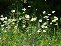Los colores del verano Foto de archivo libre de regalías